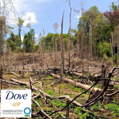 Dove se lance dans la restauration forestière