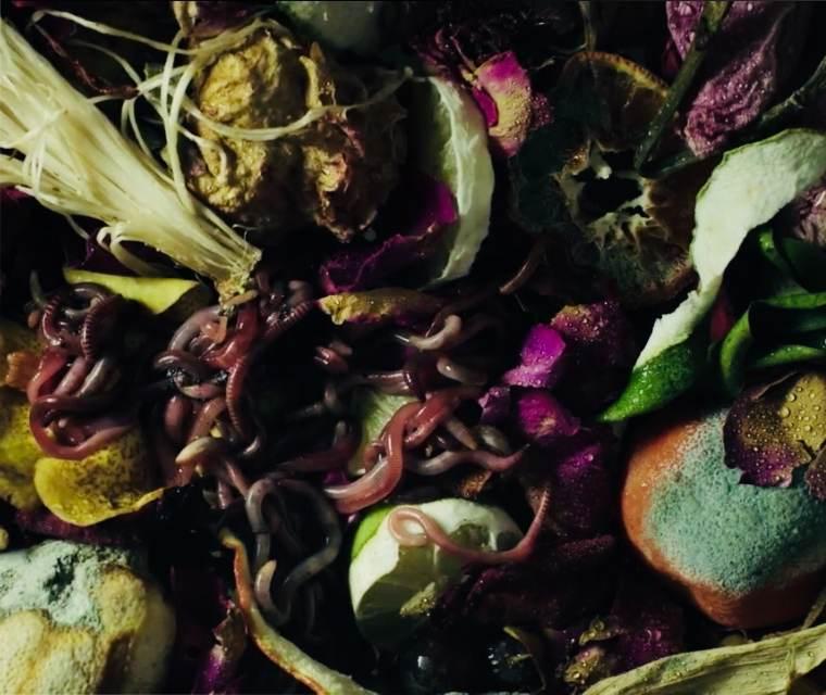 Fleurs fanées et fruits pourris avec des vers de terre
