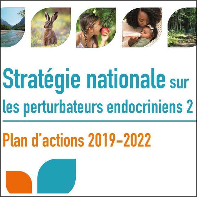 France launches its second national strategy on endocrine disruptors