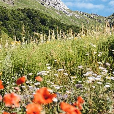 Protection de la biodiversité : Clarins s'engage devant notaire