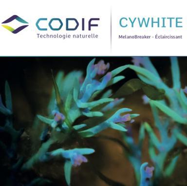 Cywhite : un actif à base d'algue pour éclaircir le teint