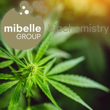 Lipobelle™ Pino C de Mibelle Biochemistry : bien plus que du CBD
