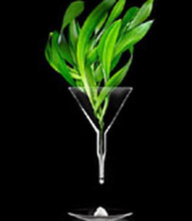Cyrille Telinge et son équipe de chercheurs ont voulu mettre au point des formules des plus naturelles / D.R.