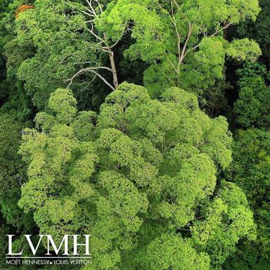 LVMH : en marche vers le développement durable